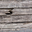 Stock Photo: Sets of cracked old wooden sleepers