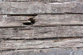 Sets of cracked old wooden sleepers — Stock Photo