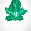 Stock Photo: Watercolor of green leaf