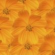 Yellow Cosmos Background. (Beautiful yellow flower background.) — Φωτογραφία Αρχείου