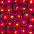 Red rose light — Lizenzfreies Foto