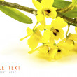 Beautiful yellow flower (Orchid) isolated on white background — Lizenzfreies Foto
