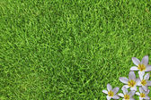 Close-up image of fresh spring green grass and beautiful flowers — Stock Photo