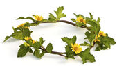 Beautiful yellow Flower Crown isolated on white background — Stock Photo