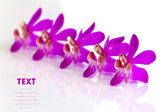 Beautiful purple-pink flower (Orchid) isolated on white backgrou — Stock Photo