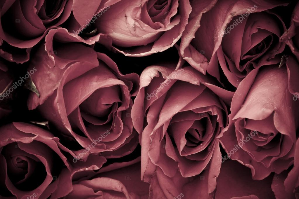 Romantic vintage rose background — Stock Photo #19505757