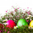 Colorful easter eggs on grass and flower — Stock Photo