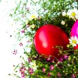 Colorful easter eggs on grass and flower — Stock fotografie