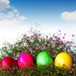Colorful easter eggs on grass and flower — ストック写真