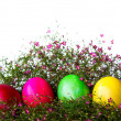 Colorful easter eggs on grass and flower — Foto Stock