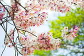 Branch of beautiful pink flower — Stock Photo