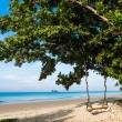 Wooden swing on a tree on a tropical beach - Stock Photo