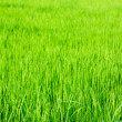 Stock Photo: Fresh spring green grass