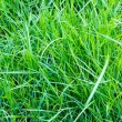Close-up image of fresh spring green grass — Φωτογραφία Αρχείου