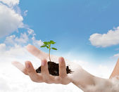 Business hand holding green small plant over blue sky with cloud — Stock Photo