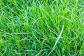 Close-up image of fresh spring green grass — Stock Photo