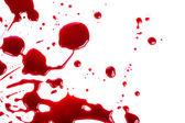 Halloween concept : Blood splatter on white background — Stock Photo