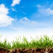 Fresh spring green grass with blue sky — Stock Photo