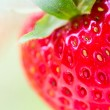 Strawberry Field — Stock Photo #38581505