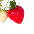 Strawberry Field — Stock Photo #38581579
