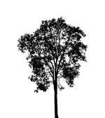 Sagoma albero isolato su bianco — Foto Stock