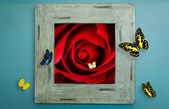 Wood frame on wall with rose and butterfly — Stock Photo