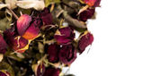 Dried rose isolated on white background — Stock Photo