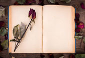 Vintage open book with dried rose — Stock Photo