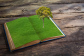 Open book with grass and tree growth on wood table — Stock Photo