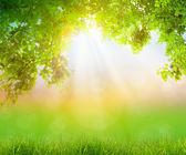 Taze bahar yeşil çim yeşil yaprak, yaz saati — Stok fotoğraf