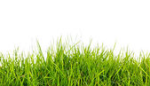 Fresh spring green grass with soil isolated on white background. — Stock Photo
