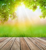 Fresh spring green grass and wood floor with green leaf , Summer — Stock Photo