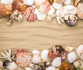 Sea shells on beach sand . Summer background — Stock Photo
