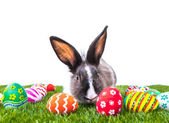 Rabbit and easter eggs in green grass isolated on white backgrou — Stock Photo