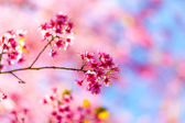 Beautiful pink flower blossom — Stock Photo