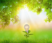 Bulb plant growing over natural green background — Stock Photo