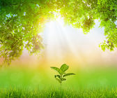 Plant growing over natural green background — Stock Photo