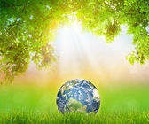 Earth on Fresh spring green grass with green leaf (Elements of t — Stock Photo