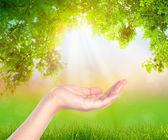 Open hand  over nature background — Foto de Stock