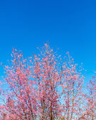Flor de bela flor-de-rosa — Foto Stock