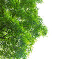 孤立在白色背景上的绿色叶 — 图库照片