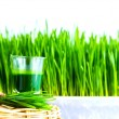 Shot glass of wheat grass with fresh cut wheat grass and wheat g — Stock Photo #50954131