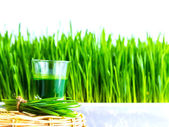 Shot glass of wheat grass with fresh cut wheat grass and wheat g — Stock Photo