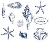 Mořské mušle — Stock vektor