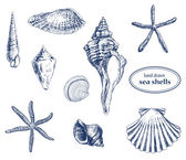 Sea shells — Vector de stock