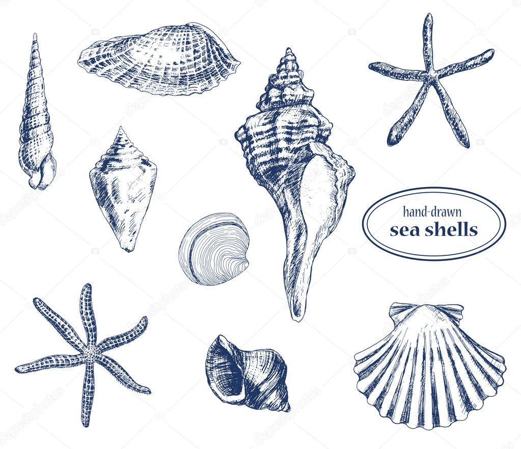 集各种手绘制的海贝壳 — 矢量图片作者 katerinamk