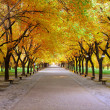 Stock Photo: Landscape of quiet path in park with nobody in autumn