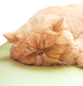 Sleepy cat lying on warm machine unwilling to open its eyes — Stock Photo