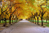 Landscape of quiet path in park with nobody in autumn — Stock Photo