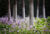 Landskap foto av skogen på våren — Stockfoto